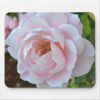 Color de rosa sagrado tapetes de ratón