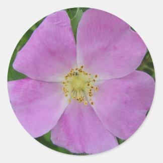 Color de rosa salvaje de la pradera F0011 (Rosa Pegatina Redonda
