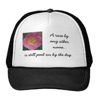 color de rosa salvaje del gorra, A subió por cualq Gorros