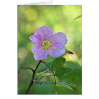 Color de rosa salvaje en reserva del nacional de K Tarjeta