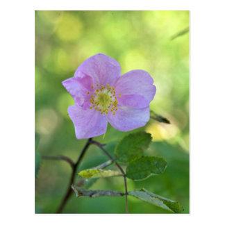Color de rosa salvaje en reserva del nacional de K Tarjeta Postal