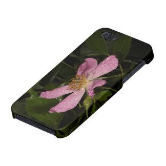 Color de rosa salvaje iPhone 5 funda