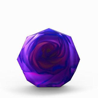 Color de rosa secreto púrpura