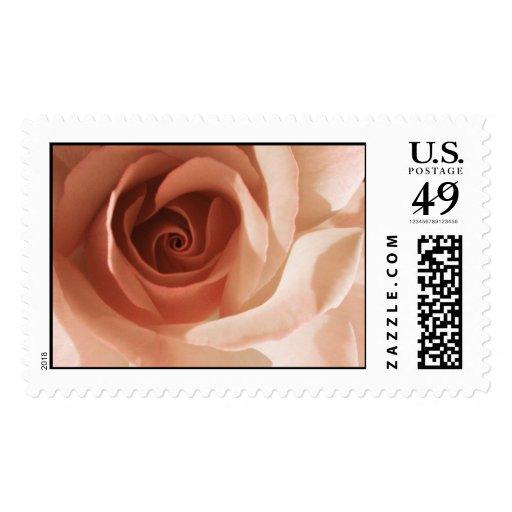 Color de rosa sello
