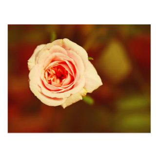 Color de rosa silenciado tarjetas postales