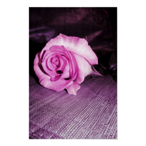 color de rosa solo poster
