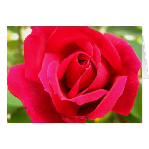 Color de rosa tarjeta