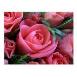 Color de rosa tarjeta postal