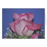 Color de rosa tarjetas