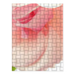 Color de rosa tejida postal