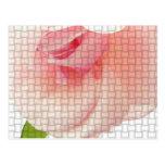 Color de rosa tejida postales