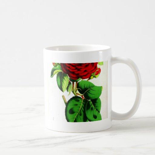 Color de rosa - vintage botánico taza clásica