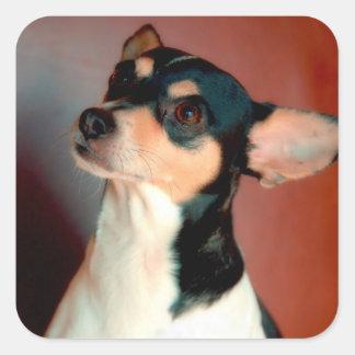 Color de Terrier de rata Calcomanías Cuadradass Personalizadas