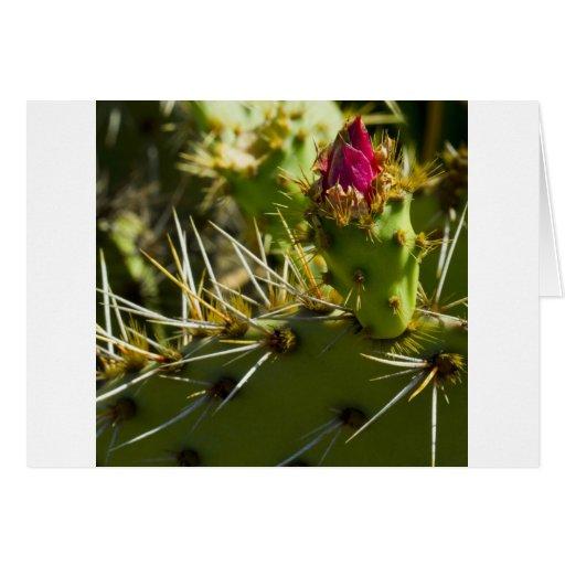Color del cactus felicitacion