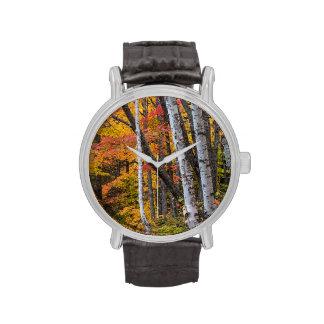 Color del otoño en el bosque cerca del puerto de reloj