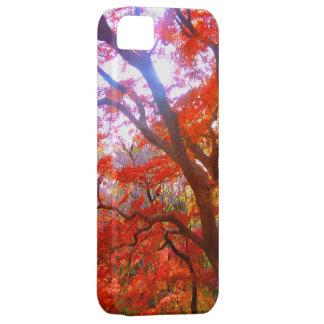 Color del otoño funda para iPhone 5 barely there