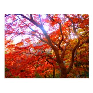 Color del otoño tarjetas postales