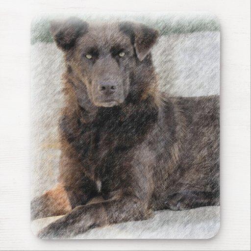 Color del perro perdiguero de bahía de Chesapeake  Tapete De Ratón