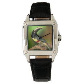 Color del phull de la foto de Toco Toucan Relojes