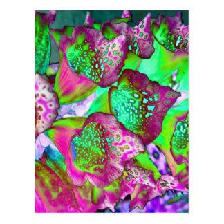 color dream postcard