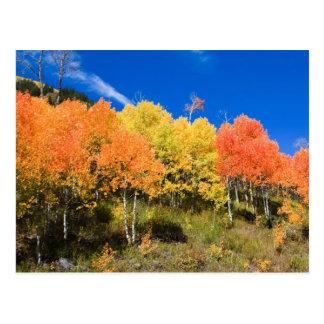 Color en la montaña postal