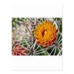 Color II del desierto Postales