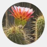 Color III del cactus Etiquetas Redondas
