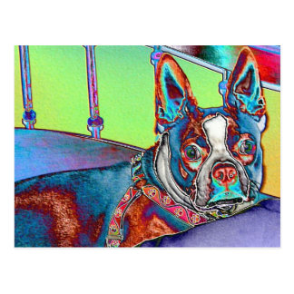 Color My World with Boston Terriers Postcard