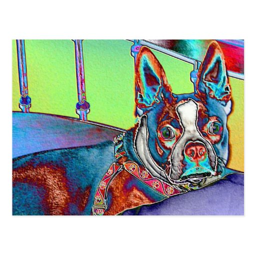Color My World with Boston Terriers Postcards