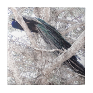 Color Pencil Peacock in Tree Tile