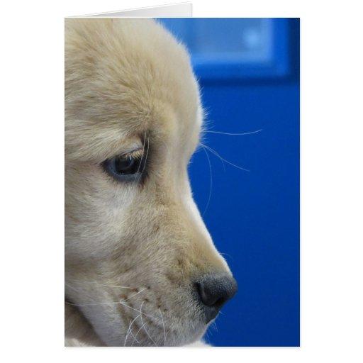 Color Pup Profile Card
