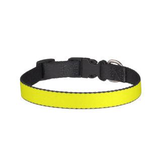 Color sólido simplemente amarillo collares para perros