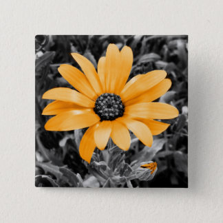 Color Splash Spring Flash African Daisy Photograph Pinback Button