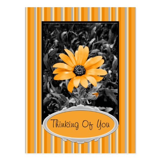 Color Splash Spring Flash African Daisy Photograph Postcard