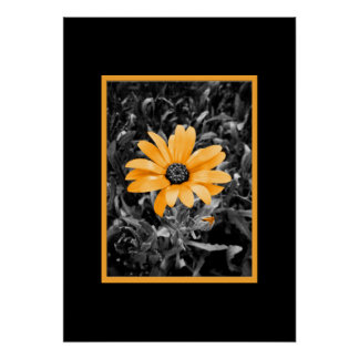 Color Splash Spring Flash African Daisy Photograph Poster