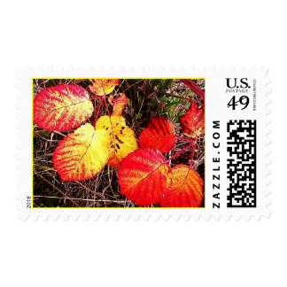Color Wildness Fall Autumn Harvest Stamps