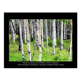 Colorado Aspen Trees Postcard