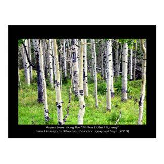 Colorado Aspen Trees Postcard
