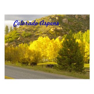 Colorado Aspens Postcard