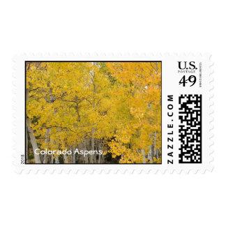 Colorado Aspens Stamp