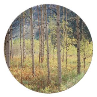 Colorado, Autumn colors of aspen trees Plate
