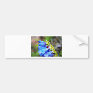 Colorado Beauty Bumper Sticker