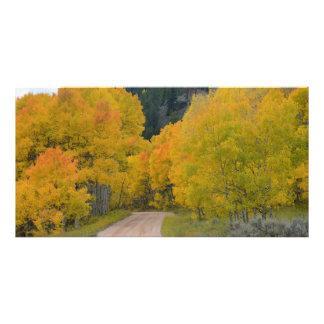 Colorado Birch Trail Art Photo