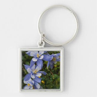 Colorado Blue Columbine near Telluride Colorado Keychain