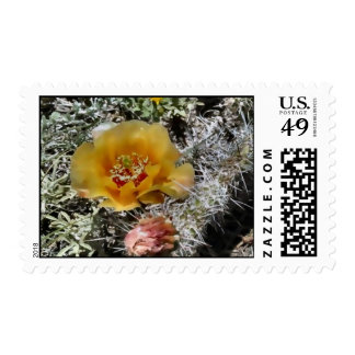 Colorado Cactus Flower Postage Stamps