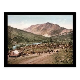 Colorado Cattle Roundup 1897 Postcards
