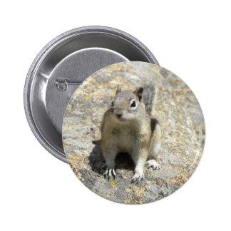 Colorado chipmunk 2 inch round button