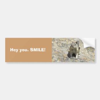 Colorado chipmunk car bumper sticker