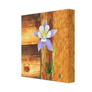 Colorado Columbine and Wood Canvas Print