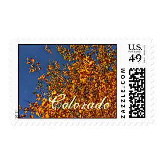 Colorado fall aspen stamp